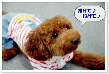 chibi-kun22a.jpg