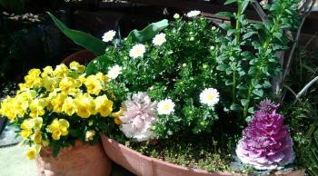春の気配2