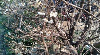 春の気配4