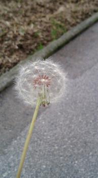 春の気配6