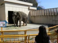 池田動物園6