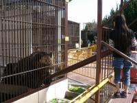 池田動物園7