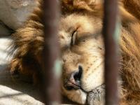 池田動物園19