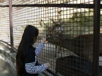 池田動物園20