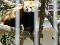 池田動物園21