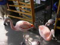 池田動物園36