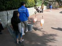 池田動物園37