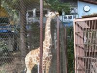 池田動物園46