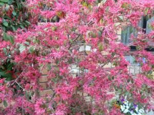 庭に咲く花 (2)