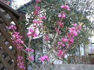 庭に咲く花3