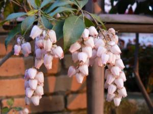 庭に咲く花4