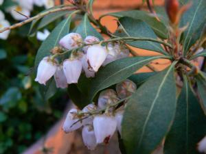 庭に咲く花5