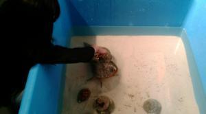 海と川の魚たち4