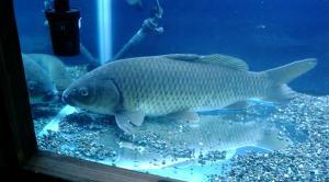 海と川の魚たち8