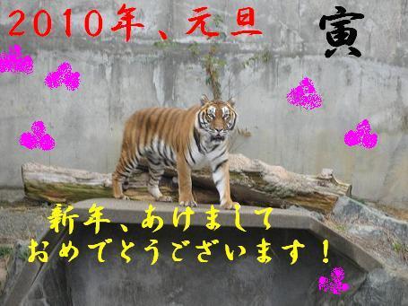 IMG_2748_20091231192439.jpg