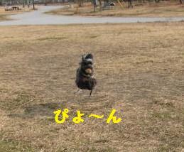 飛んでます