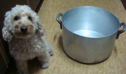 直径36cm鍋
