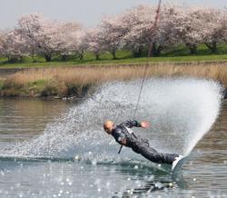 Zucky桜