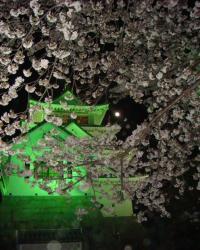 夜桜一夜城
