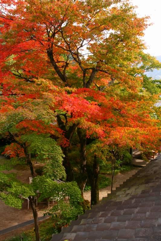 s-由布岳紅葉20081105 035
