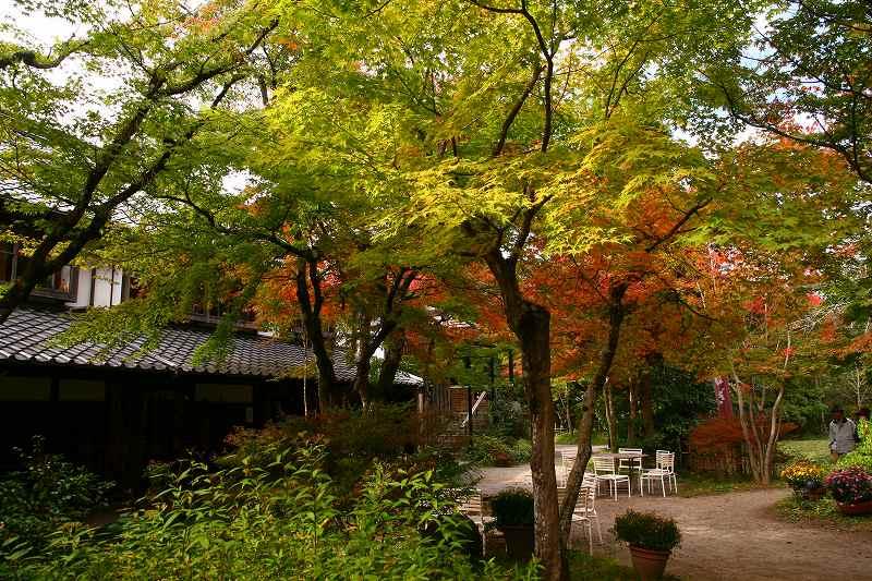 s-由布岳紅葉20081105 036