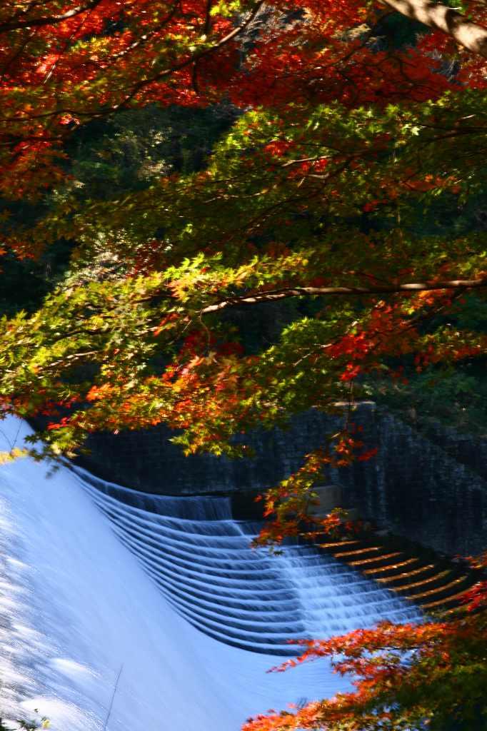 s-岡城用作白水20081112 134