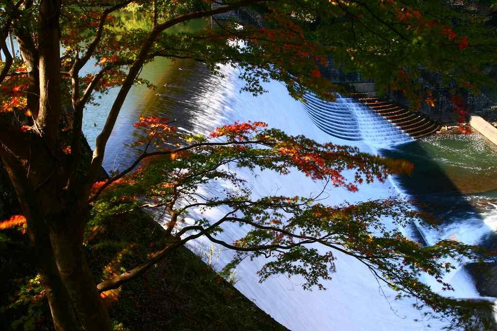 s-岡城用作白水20081112 123