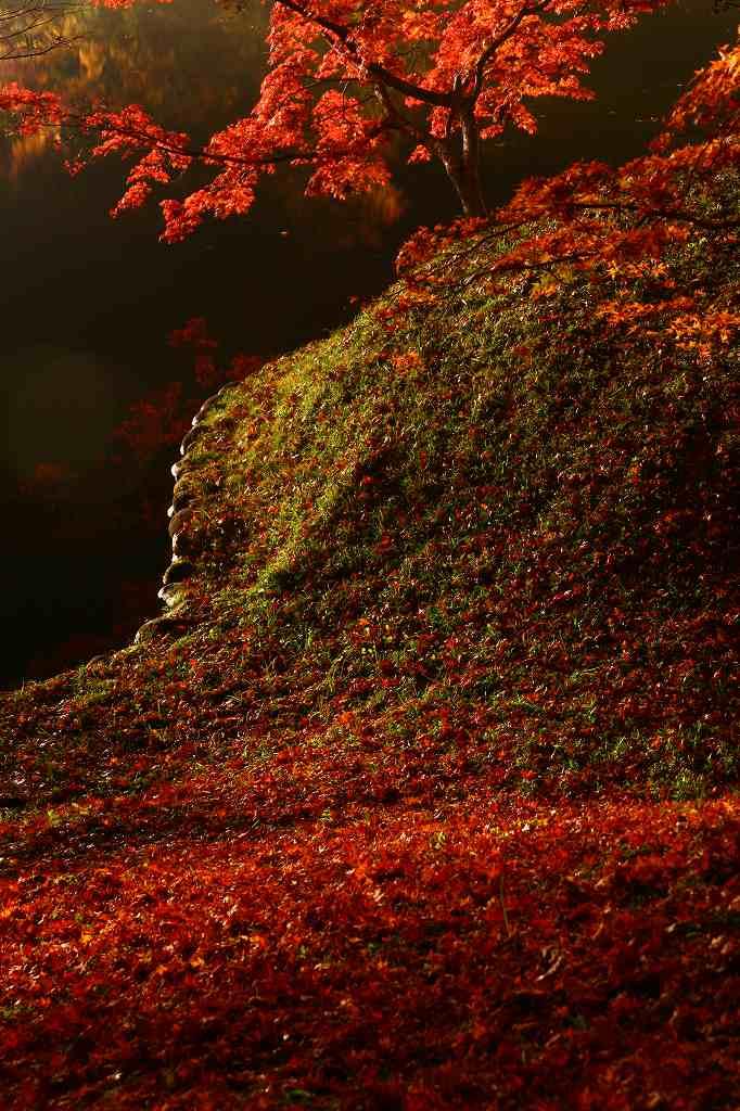 s-用作岡城20081116 210