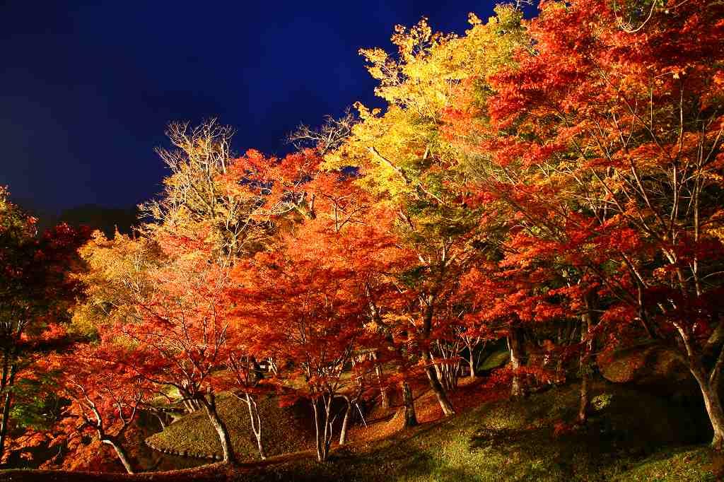 s-用作岡城20081116 166