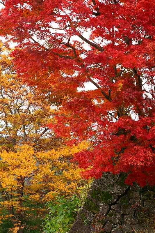 s-用作岡城20081116 087
