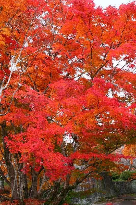 s-用作岡城20081116 136