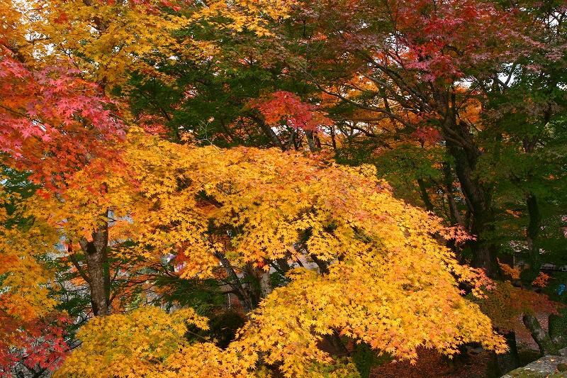 s-用作岡城20081116 124