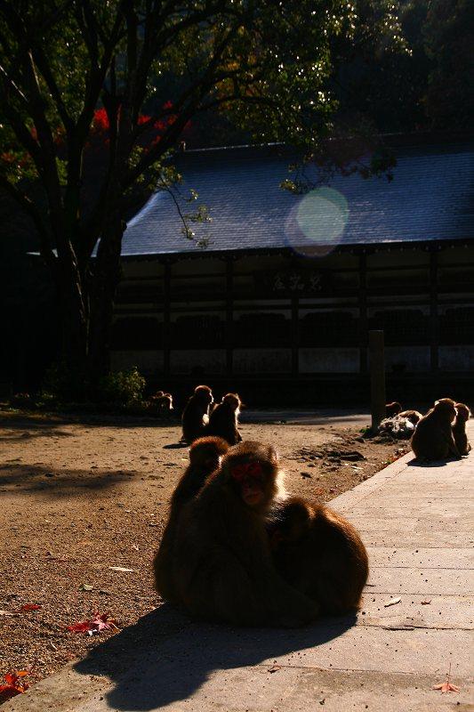 s-高崎山20081128 085