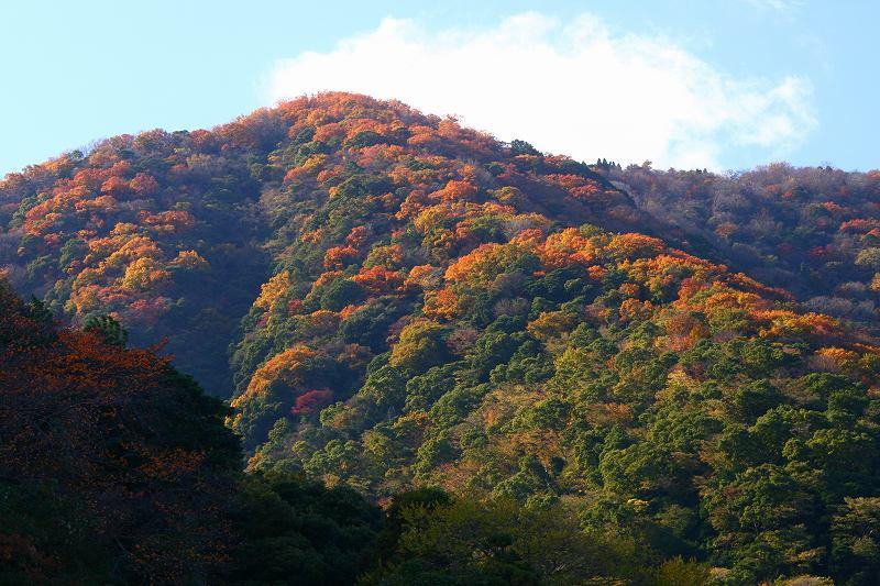 s-高崎山20081130 001
