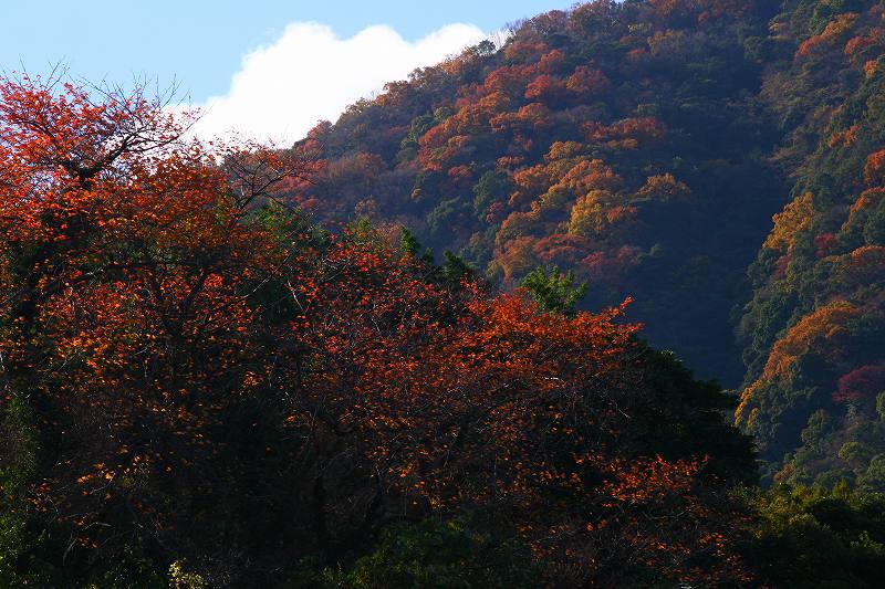 s-高崎山20081130 006