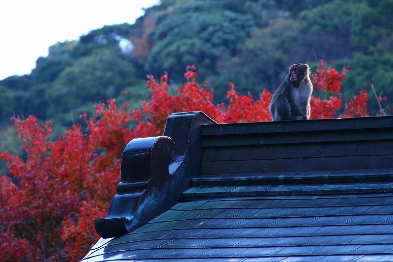 s-高崎山20081130 141