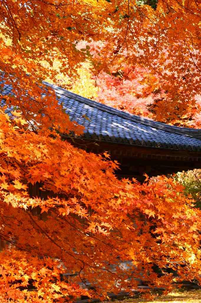 s-富貴寺20081202 014