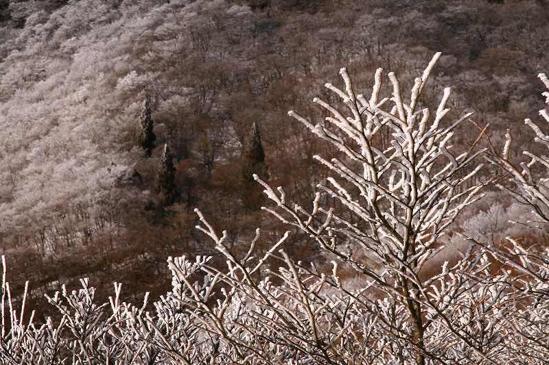 s-鶴見山別府花火20081223 132