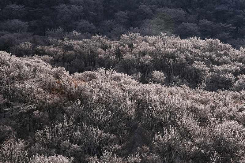 s-鶴見山別府花火20081223 138