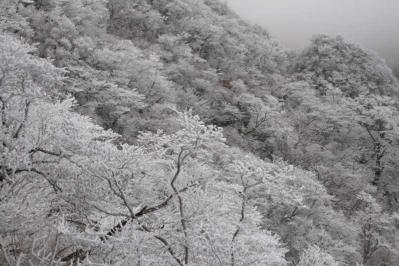 s-鶴見鞍ケ戸20090104 115
