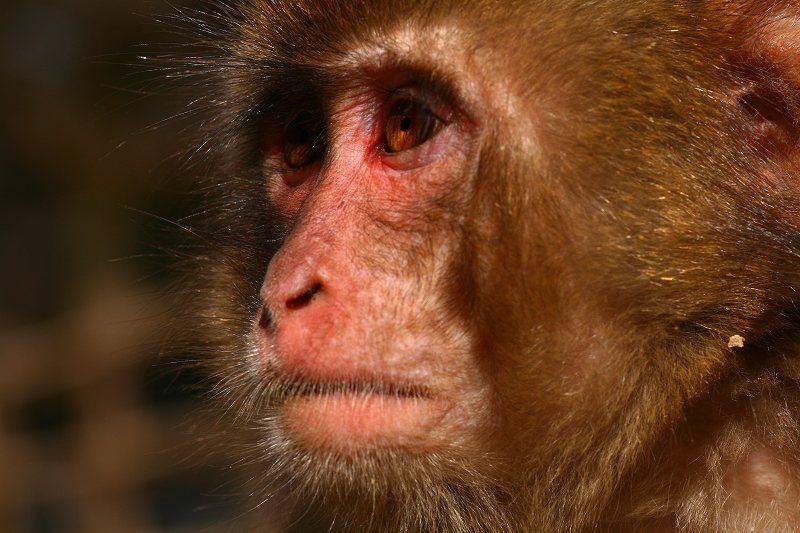 s-猿20090124 001