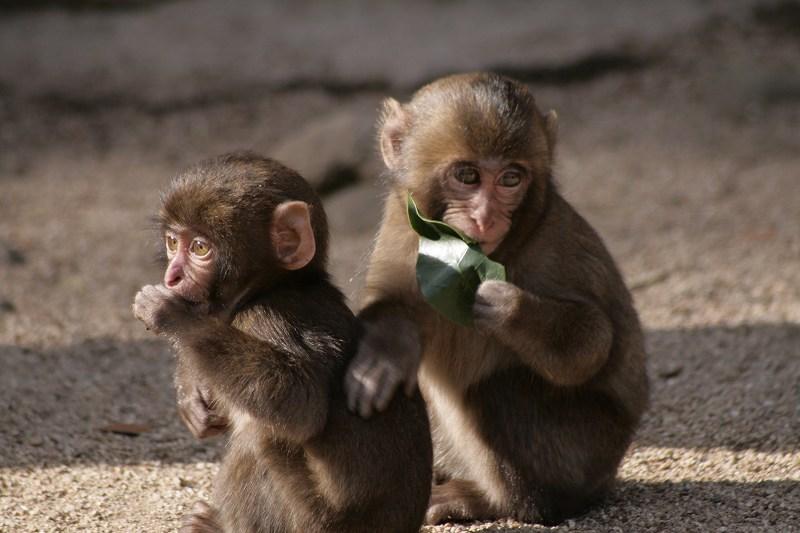 s-猿20090124 042