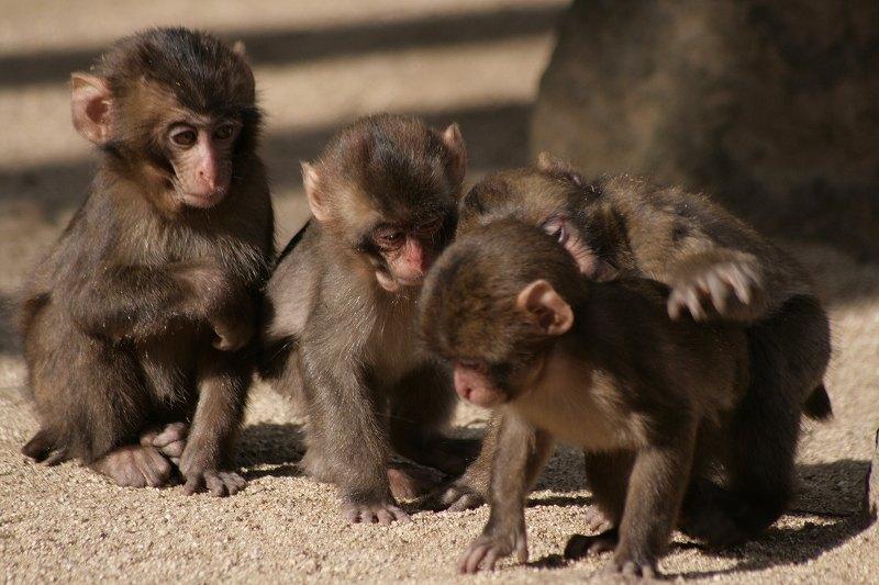 s-猿20090124 047