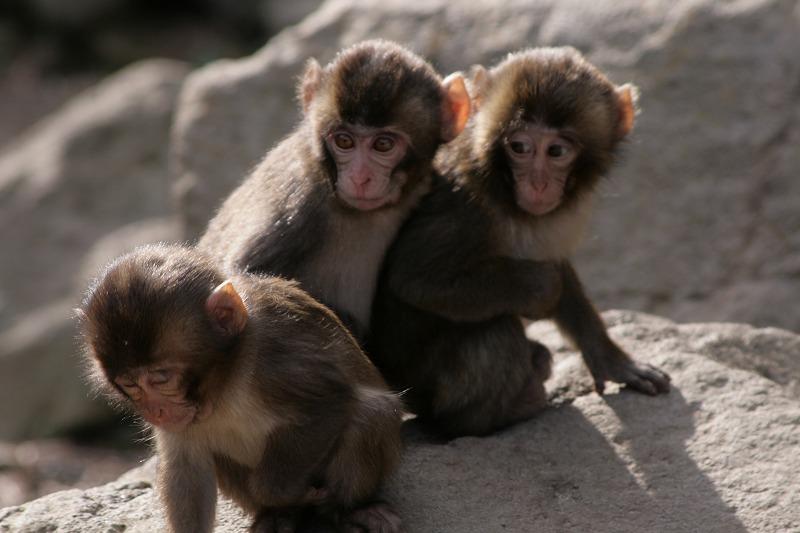 s-猿20090124 053