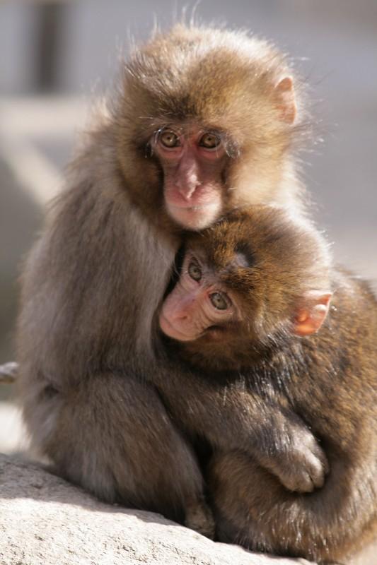 s-猿20090124 056