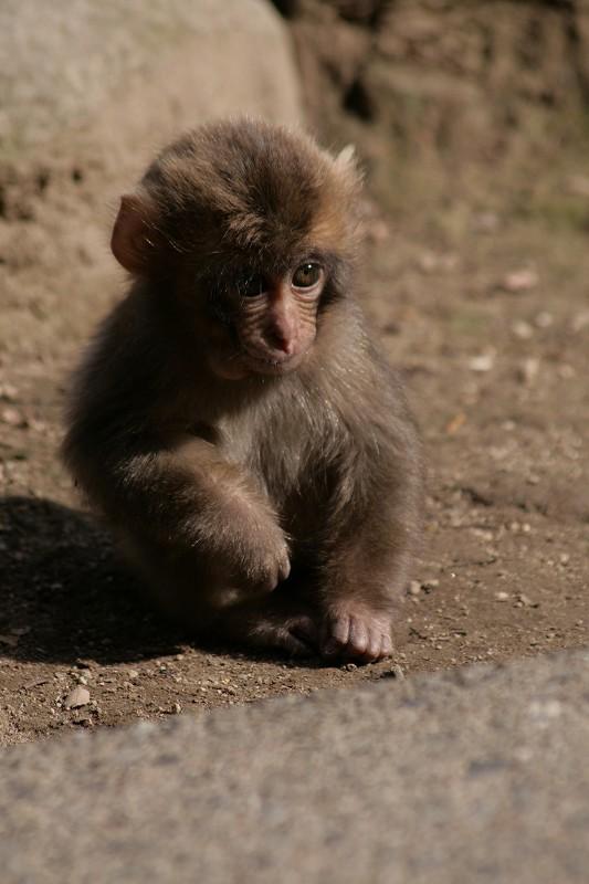 s-猿20090124 061