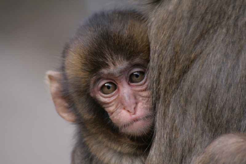 s-猿20090124 067