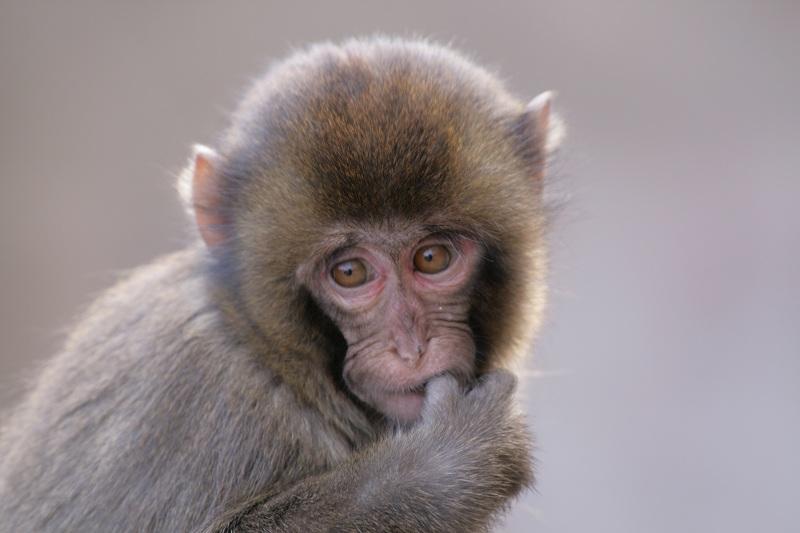 s-猿20090124 068