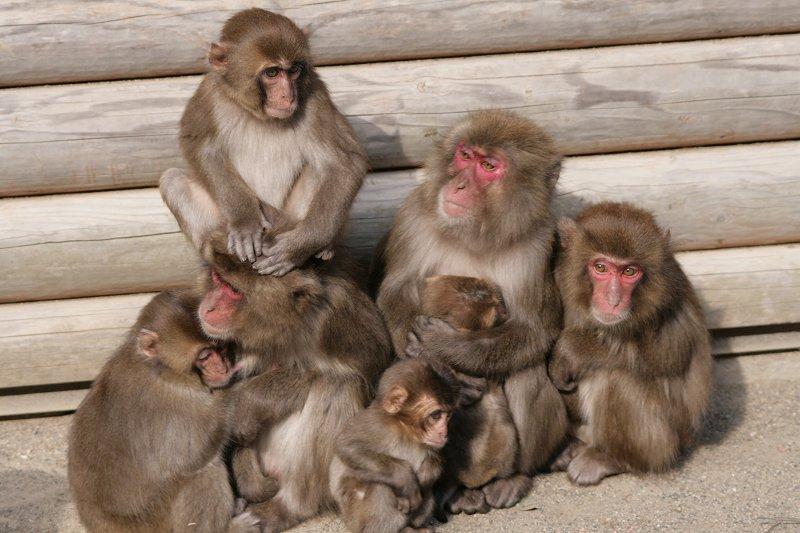 s-猿20090124 076