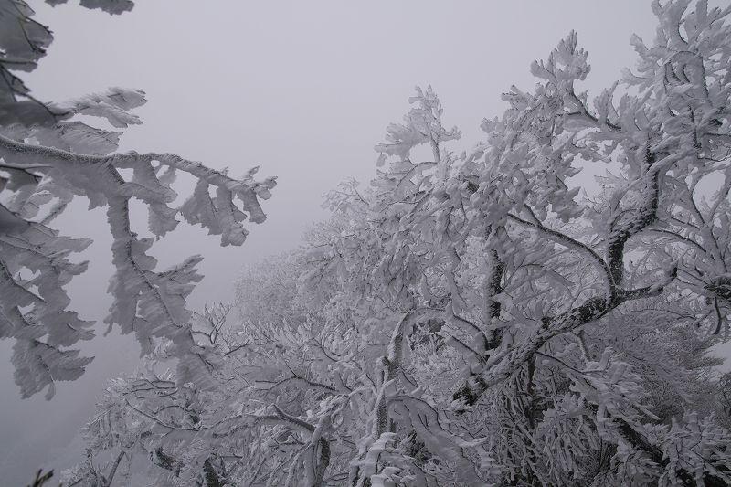 s-鶴見鞍ケ戸岳20090202 056